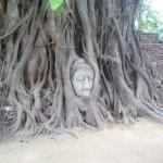 タイ・・木の根にブッダの頭部が・・・